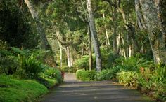 Makaranga (venue in Kloof with beutiful gardens, restaurant, picnic baskets) Garden Lodge, Conference Facilities, Kwazulu Natal, Paradise On Earth, Can Run, Close To Home, A Whole New World, Lush Green, Botanical Gardens
