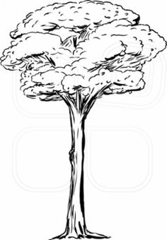Outlined single tall tree over isolated white background. Photo by Eric Basir on Mostphotos. Abstract, Illustration, Artwork, Summary, Work Of Art, Auguste Rodin Artwork, Illustrations, Artworks, Illustrators