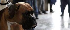 Svaligiano la villa e rubano il cane ma lui si libera e torna a casa da solo... » Fbsocialpet.com: il social forum per cani, gatti, cavalli, tutti gli animali