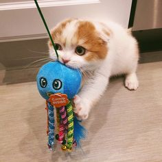 Playtime is an important part of training your cat! (IG pic @theoandcleo)