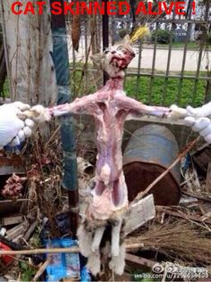 yulin festival - have no words for this