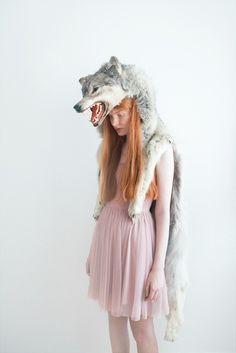 wolf carissagallo