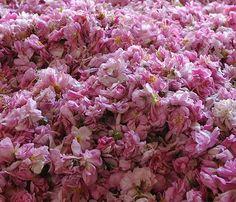 Apa de Toaleta Roses et Reines te invaluie in note proaspete si catifelate, o poveste fragranta care celebreaza floarea reginelor. Muzele care au ins