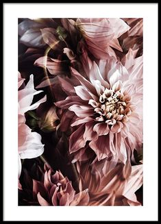 Wand des Dahlien-Plakats Wall of the dahlia poster - - posters Check more at flowe Dahlia, Gold Poster, Poster Wall, Poster Collage, Poster Poster, Art Posters, Desenio Posters, Buy Posters Online, Vintage Travel Posters