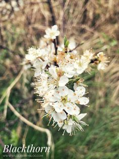 Whispering Trees and Forget-Me-Not Skies: Finding Wildflowers in April | Wild Library Irish Landscape, Chestnut Horse, Aspen Trees, Forget Me Not, Growing Tree, New Perspective, Finding Joy, Wildflowers, Deities
