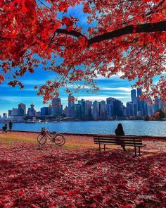 Canada is a vast and diverse country. While the west has Vancouver and the Rockies, Eastern Canada is also a thrilling Nice, Europe Destinations, Amazing Destinations, Stanley Park, Park Photos, Natural Scenery, Canada Travel, Nature Photography, Banff National Park