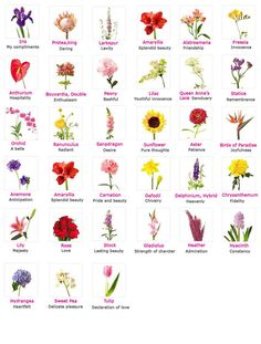Image detail for -Flowers name and their meanings. For Information of Visitors