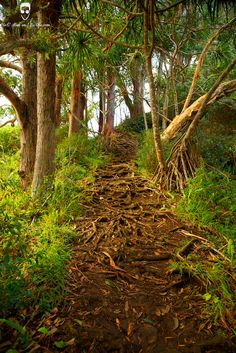 Following natures trails in Hawaii