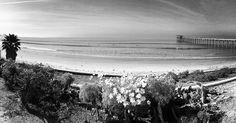 A #calm #winter's day by the #ocean #westcoast #lajolla #sandiego #ucsd #scrippspier #scrippsinstituteofoceanography