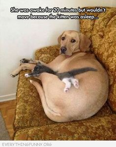 funny caption dog was awake 20 minutes won't move and disturb sleeping cat