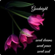 Good Night Prayer, Good Night Blessings, Good Night Wishes, Good Night Sweet Dreams, Good Night Thoughts, Good Night Image, Good Night Messages, Good Night Quotes, Morning Quotes