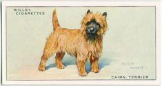 Dogs Dog Artwork, Collector Cards, Cairn Terrier, New York Public Library, Book Of Shadows, Gods Love, Art Drawings, Dogs, Vintage Illustrations