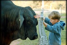 When we lived in between corn fields and cows...and the kids got under the fence with the bulls. Scared me half to death :-(