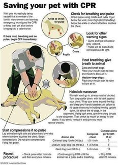 Information that could save your pet's life. Save this, share this, and get more info here:     If you reside in Canada:  http://www.cpr-pro.com/cprfirstaidtrainingontario.html    If you reside in the US:  http://www.redcross.org/prepare/disaster/pet-safety