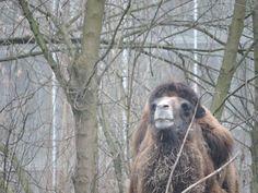 Camel by Romuald Statkiewicz