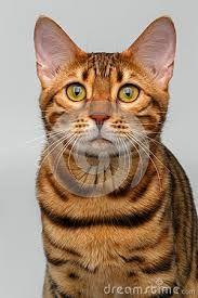 """Résultat de recherche d'images pour """"chat regardant un papillon"""""""