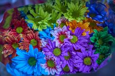 Colorful bargain bunch (Re-edited) by David Gonzalez on David Gonzalez, Colorful, Flowers, Plants, Plant, Royal Icing Flowers, Flower, Florals, Floral