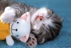 【画像】ぬいぐるみを抱きながら寝る猫が可愛すぎるwwwwwwwwww
