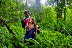 Jadav Payeng Forest