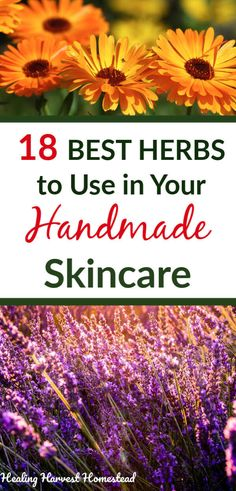 The 18 BEST Herbs to Use in Your Homemade Skincare Products (Infused Creams, Oils, Soaps, Salves, Bu Homemade Skin Care, Diy Skin Care, Natural Skin Care, Natural Health, Lotion, Herbs For Health, Infused Oils, Skin Care Remedies, Nutrition