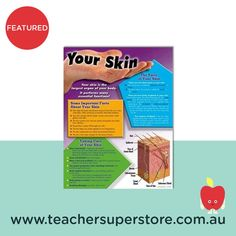 FEATURED: Your Skin Chart A detailed and comprehensive chart perfect for teaching students about the skin. It can also assist with understanding the importance of good hygiene. Health And Physical Education, Type Posters, Teaching Aids, Important Facts, Helping Others, Your Skin, Students, Teacher, Chart