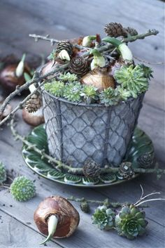 Easter Centerpiece or Gift   Sprouting bulbs with succulents in zinc container wrapped in chicken wire and twigs.  Love!