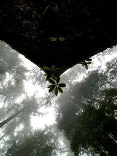 Redwood National Forest 2017