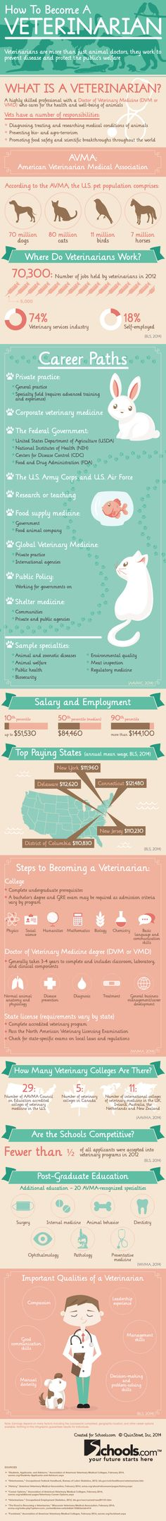 Do you want to be a veterinarian? http://www.schools.com/visuals/how-to-become-a-veterinarian.html #pet #infographic