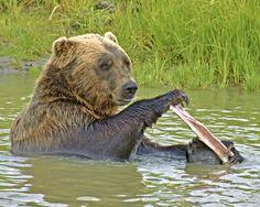 Da Bear by Wilkinswerks  on 500px