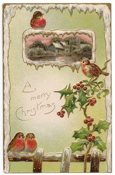 Frosty Christmas Robins Postcard, 1916