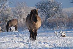 <3 de winter is beautiful <3
