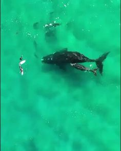 Beautiful Sea Creatures, Animals Beautiful, Shark Pictures, Animal Pictures, Funny Animal Videos, Cute Funny Animals, Nature Animals, Animals And Pets, Underwater Animals