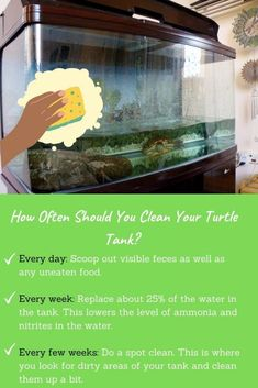 How Often Do You Have to Clean a Turtle Tank? - TurtleHolic