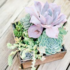 Succulent centerpiece | 100 Layer Cake - great for an outdoor picnic wedding!