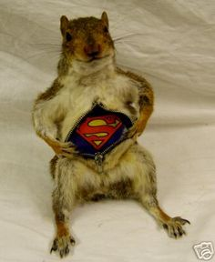 anthro taxidermy