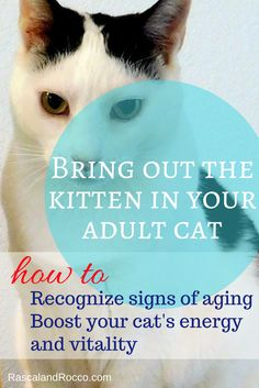 Bring the kitten back! How to recognize signs of aging in your cat and boost your cats energy and vitality | cat health | cat care | senior cats | cat food | healthy cat food | dry cat foods #AwesomeAsEver #ad @Hillspet