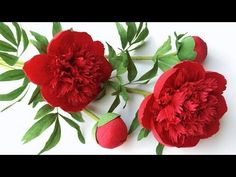(2) ABC TV | How To Make Red Charm Peony Paper Flower From Crepe Paper - Craft Tutorial - YouTube