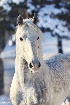 Snö häst