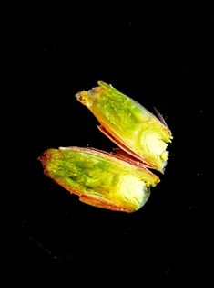 Natural Healing, Flora, Health Fitness, Vegetables, Healthy, Star, Big Guns, Garden, Fried Cabbage Recipes