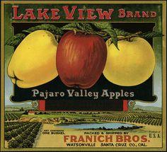 Apple crate label watsonville vintage pajaro valley santa cruz co lake view old Vintage Artwork, Vintage Posters, Vintage Advertisements, Vintage Ads, Vintage Food Labels, Vegetable Crates, Etiquette Vintage, Apple Crates, Fruit Box