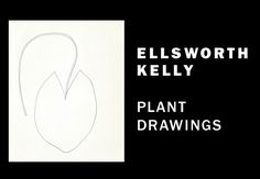 Ellsworth Kelly: Plant Drawings on view at the Met through September 3, 2012