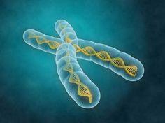 Yaşlanma kök hücre DNA'larında mutasyonları artırıyor  Şimdiye kadar kök hücrelerin yaşlanmanın etkilerinden pek etkilenmediği ve bu özelliği sayesinde birçok potansiyel tedavi için kullanılması bekleniyordu. Scripps Araştırma Enstitüsü ve Scripps Translasyonel Bilim Enstitüsü'nde çalışan bilim...