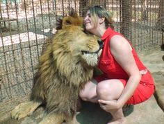 Lujan Zoo in Argentina, Allows Guests To Ride, Cuddle And Feed Lions, Bears - HitFull.com