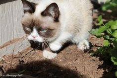 The Daily Grump | March 3, 2013