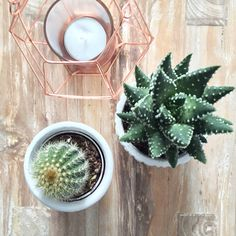 Cactus and copper | Peet likes