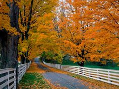 Scenic Back Roads with fall colors, New Hempshire - 11 x 14 Photograph H-1019. $15.00, via Etsy This Man is a Wonderful photographer of great American scenes. :)