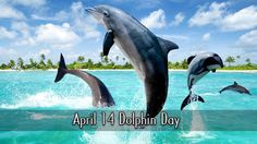 April 14 Dolphin Day
