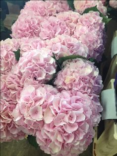 Hydrangea Verena...Sold in bunches of 10 stems from the Flowermonger the wholesale floral home delivery service.