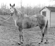 A dirty, wet horse can have rain rot hiding beneath their winter coat.