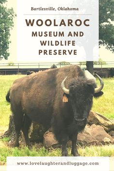 If you're looking for bison, be sure to check out Woolaroc Museum and Wildlife Preserve near Bartlesville, Oklahoma, in the U.S. The museum houses a wonderful collection of American Indian ans cowboy art and artifacts. It's definitely worth a stop. #Woolaroc #Barltesville #Oklahoma #bison #Midwest #MidwestTravel #familytravel #history #buffalo #USTravel #UnitedStates